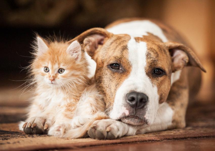 Foto Unul din doi români nu concepe viața fără un animal de companie